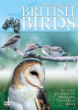 Rent Ultimate Guide to British Birds Online DVD Rental