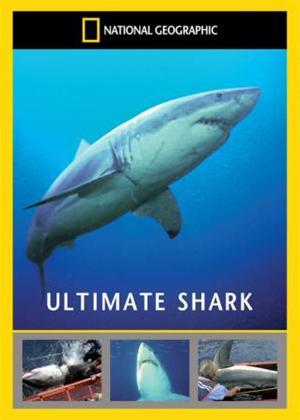 Rent National Geographic: Ultimate Shark Online DVD Rental
