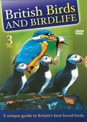 Rent Birtish Birds and Birdlife: Vol.1-3 Online DVD Rental