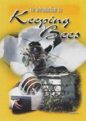 Rent An Introduction to Keeping Bees Online DVD Rental