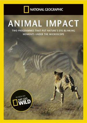 Rent National Geographic: Animal Impact Online DVD Rental