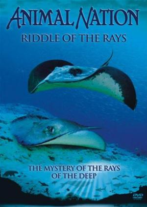 Rent Animal Nation: Riddle of the Rays Online DVD Rental