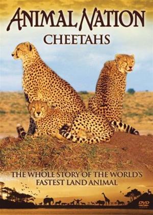 Rent Animal Nation: Cheetahs Online DVD Rental