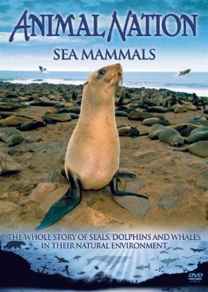 Rent Animal Nation: Sea Mammals Online DVD Rental