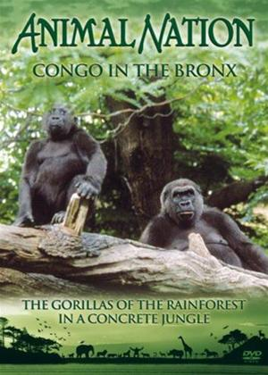 Rent Animal Nation: Congo in the Bronx Online DVD Rental