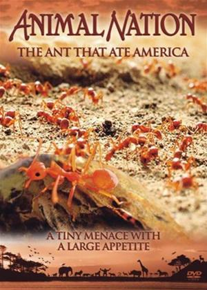 Rent Animal Nation: The Ant That Ate America Online DVD Rental