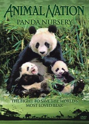 Rent Animal Nation: Panda Nursery Online DVD Rental