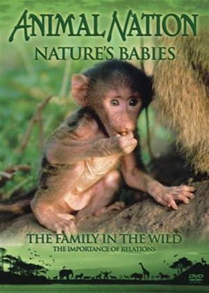 Rent Animal Nation: Nature Babies: The Family in The Wild Online DVD Rental