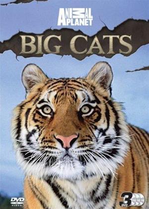 Rent Animal Planet: Big Cats Online DVD Rental