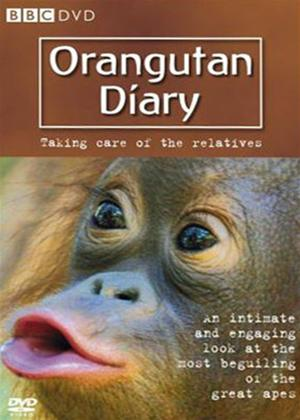 Rent Orangutan Diary: Taking Care of the Relatives Online DVD Rental