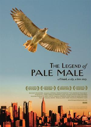 Rent The Legend of Pale Male Online DVD Rental