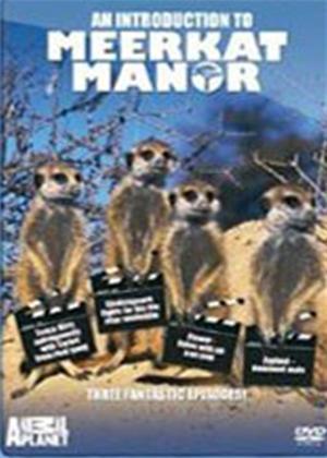 Rent Animal Planet: An Introduction to Meerkat Manor Online DVD Rental