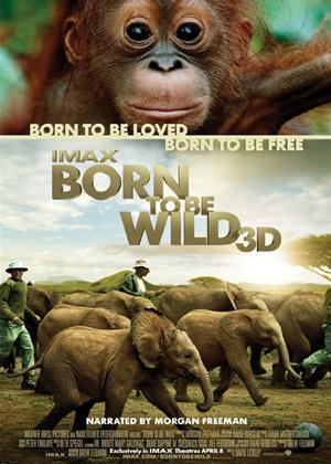 Rent IMAX: Born to Be Wild Online DVD Rental