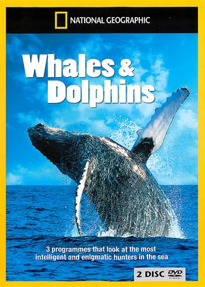 Rent National Geographic: Whales and Dolphins Online DVD Rental