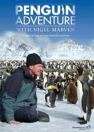Rent Penguin Adventure with Nigel Marven Online DVD Rental
