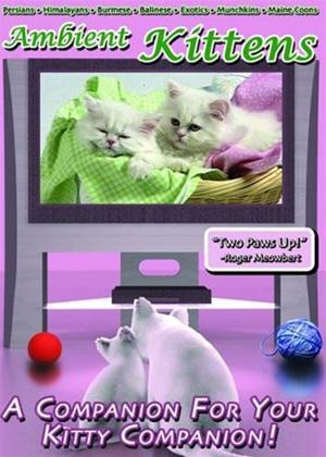 Rent Ambient Kittens Online DVD Rental