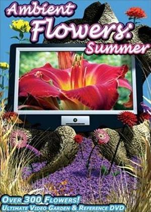 Rent Ambient Flowers: Summer Online DVD Rental