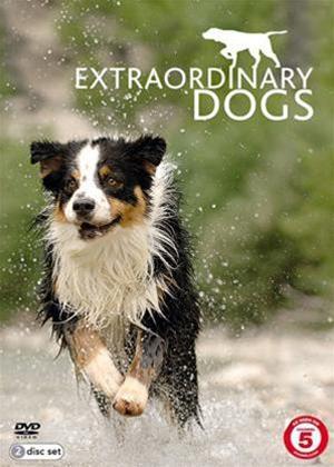 Rent Extraordinary Dogs Online DVD Rental