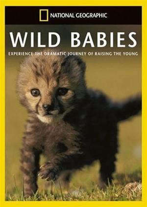 Rent National Geographic: Wild Babies Online DVD Rental