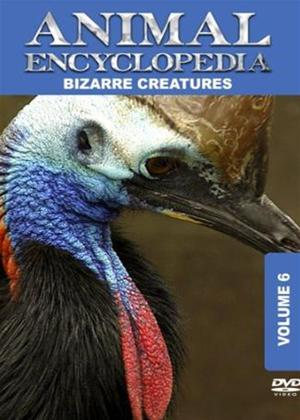 Rent Animal Encyclopedia: Vol.6: Bizarre Creatures Online DVD Rental