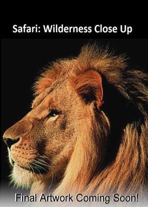 Rent Safari: Wilderness Close Up Online DVD Rental