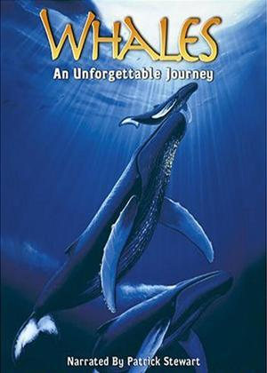 Rent Whales: An Unforgettable Journey Online DVD & Blu-ray Rental
