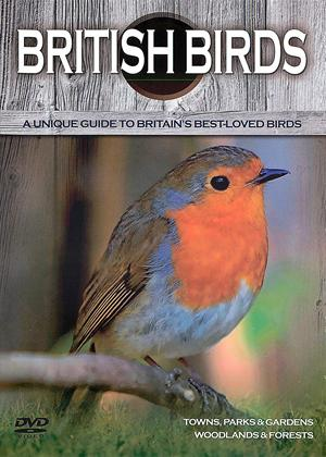 Rent British Birds: Towns, Parks, Gardens, Woodlands and Forests Online DVD Rental