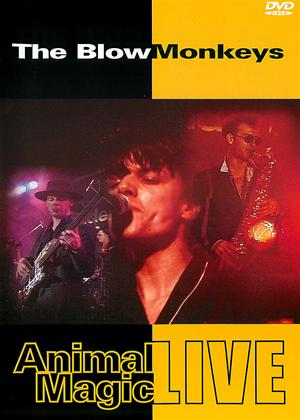 Rent The Blow Monkeys: Animal Magic - Live Online DVD Rental