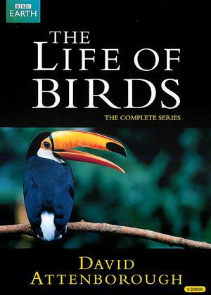 Rent David Attenborough: The Life of Birds: Series Online DVD Rental