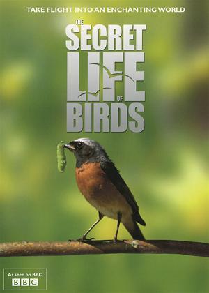 Rent The Secret Life of Birds Online DVD Rental