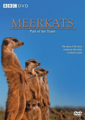 Rent Meerkats: Part of a Team Online DVD Rental