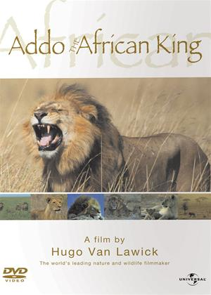 Rent Hugo Van Lawick: Addo the African King (aka Addo, Koning Der Dieren) Online DVD & Blu-ray Rental