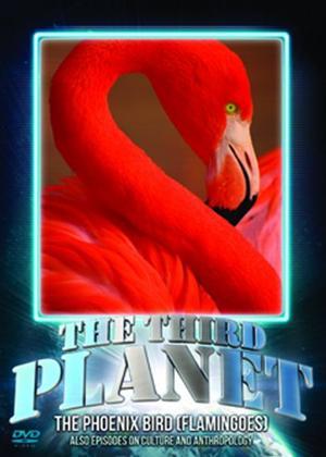 Rent The Third Planet: The Phoenix Bird (Flamingoes) Online DVD Rental