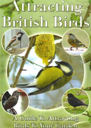 Rent Attracting British Birds Online DVD Rental