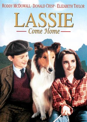 Rent Lassie Come Home Online DVD Rental