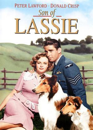 Rent Son of Lassie Online DVD Rental