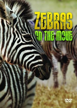 Rent Zebras: On the Move Online DVD Rental