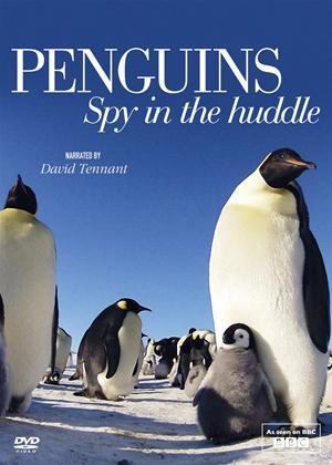 Rent Penguins: Spy in the Huddle Online DVD Rental