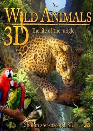 Rent Wild Animals: Life of the Jungle Online DVD Rental