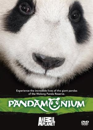 Rent Pandamonium Online DVD Rental