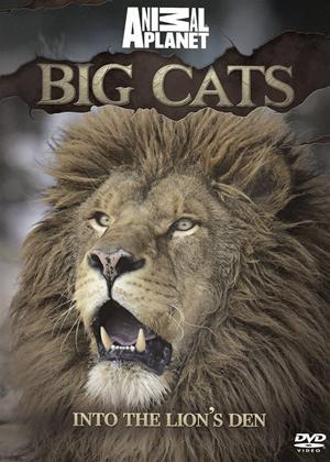 Rent Animal Planet: Big Cats Into the Lion's Den Online DVD Rental