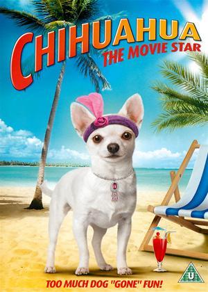 Rent Chihuahua: The Movie Star (aka Chihuahua Too!) Online DVD Rental
