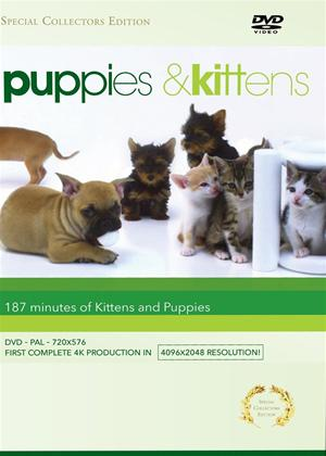 Rent Puppies and Kittens Online DVD Rental