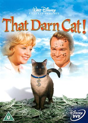 Rent That Darn Cat! Online DVD Rental