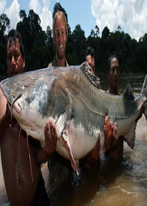 Rent National Geographic: Fish Warrior Online DVD Rental