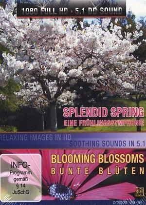 Rent Splendid Spring Online DVD Rental