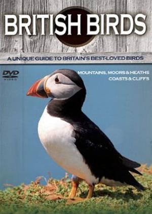Rent British Birds: Mountains, Coasts and Cliffs Online DVD Rental