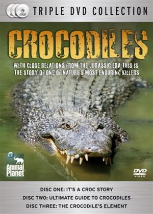 Rent Crocodiles Online DVD Rental
