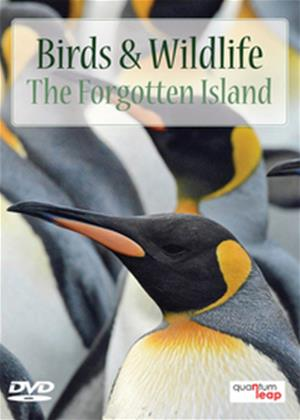 Rent Birds and Wildlife: The Forgotten Island Online DVD Rental