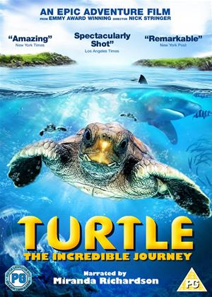 Rent Turtle: The Incredible Journey Online DVD Rental